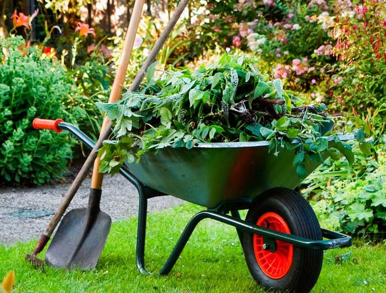 sydney garden care and maintenance service