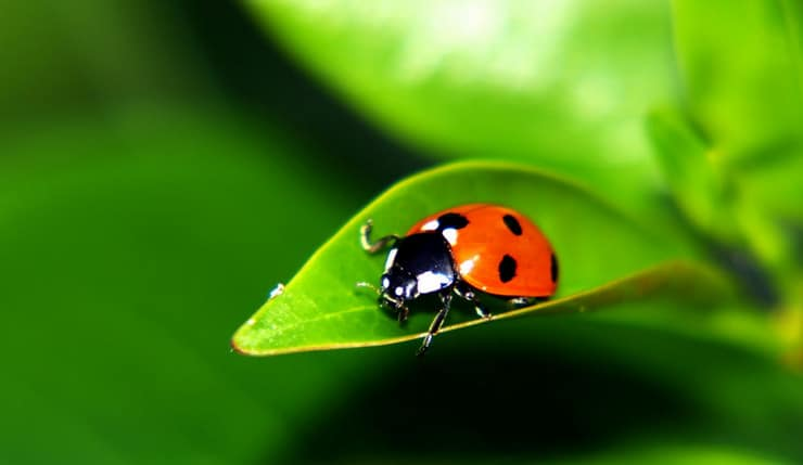 ladybird on a leaf in a garden