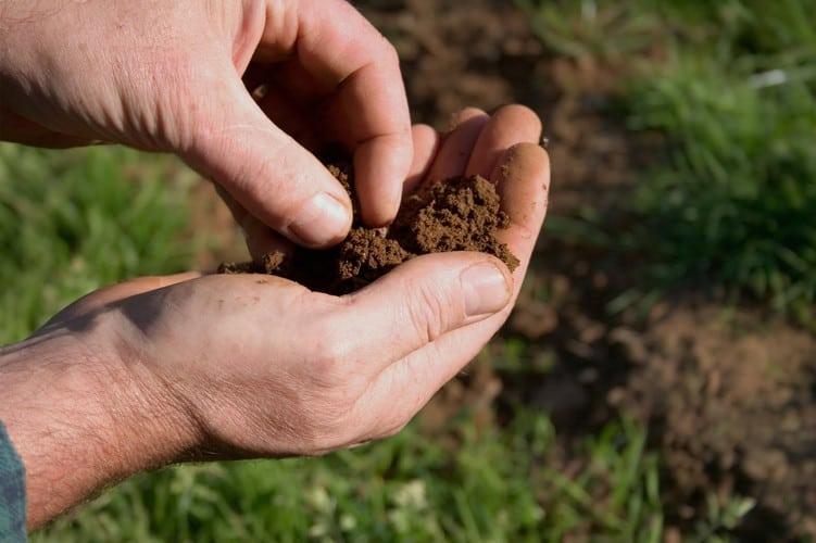 NBG landscapes' team member testing soil