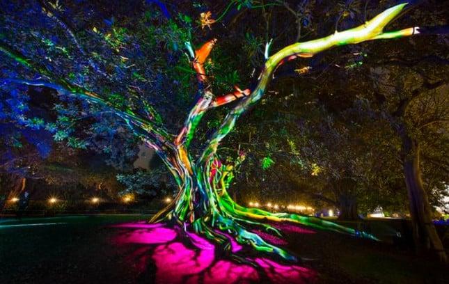 Royal Botanic Garden in Sydney During Vivid Festival