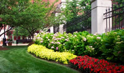 commercial landscaping in Pyrmont, Sydney