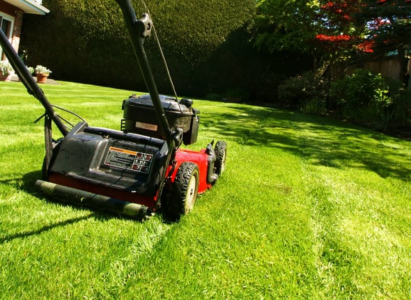 lawn mowing in Sydney