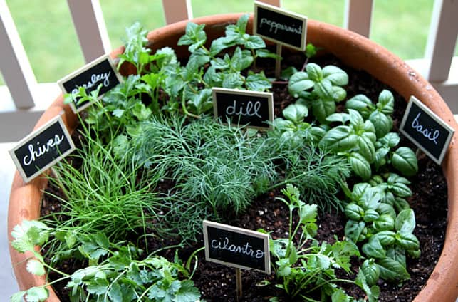 one pot herb gardening