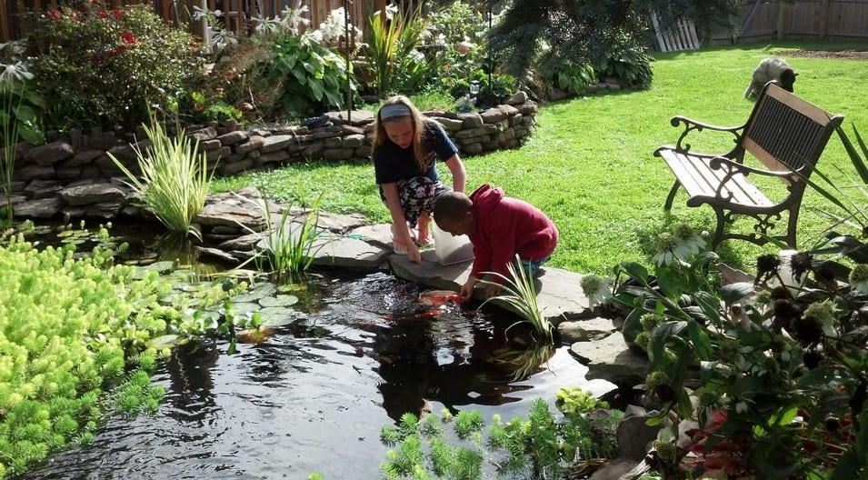 kids keeping backyard koi pond clean