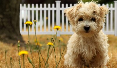 dog friendly yard surfaces