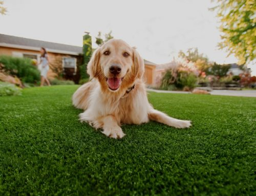 Tips for Maintaining Artificial Grass – Synthetic Turf Sydney