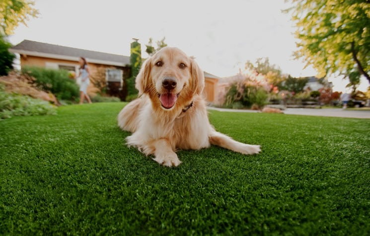 synthetic grass turf for kids and pets