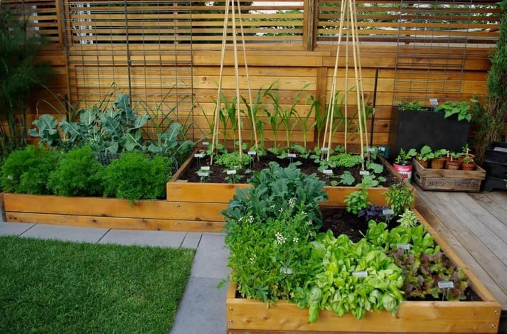 herbs planted in raised garden beds