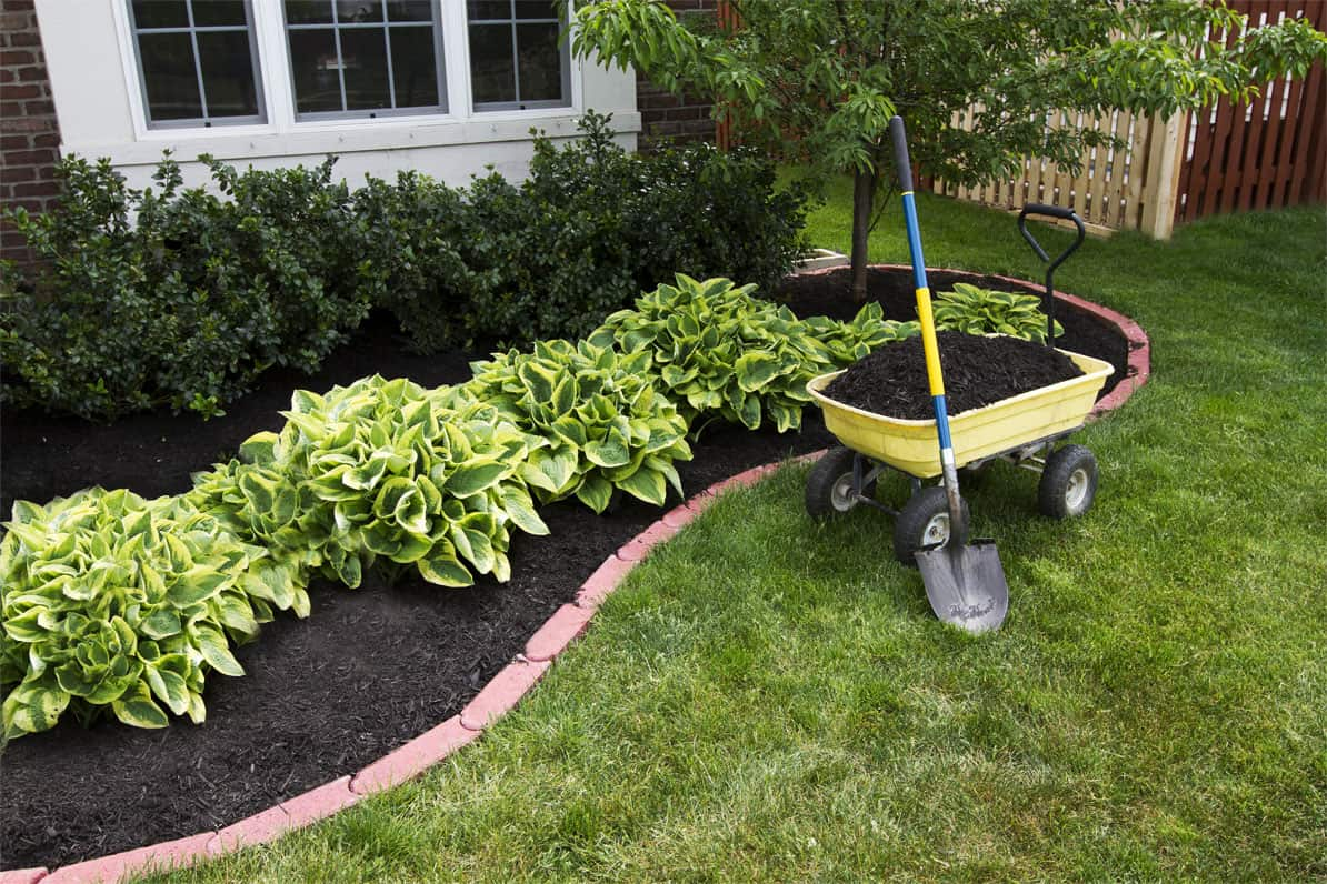 Best Mulch for the Soil