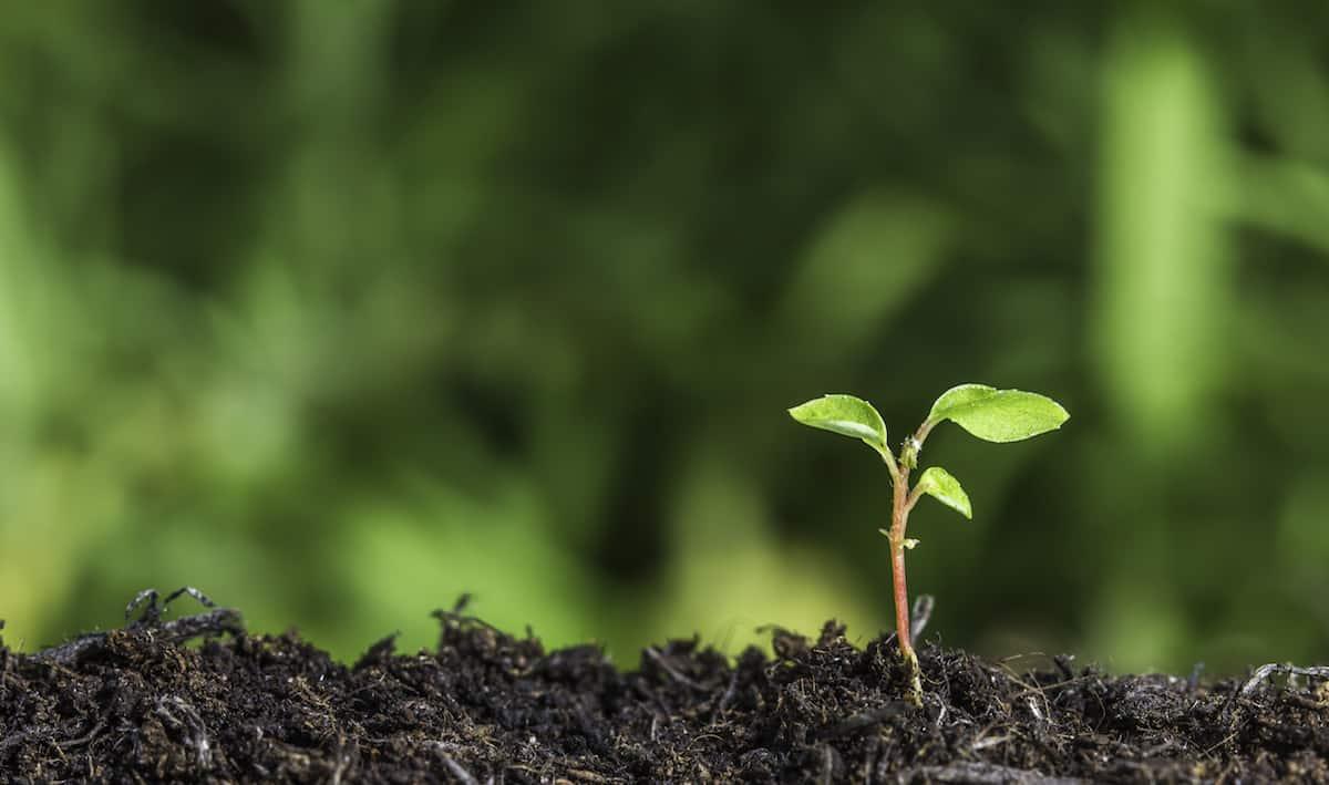 How to Test Garden Soil