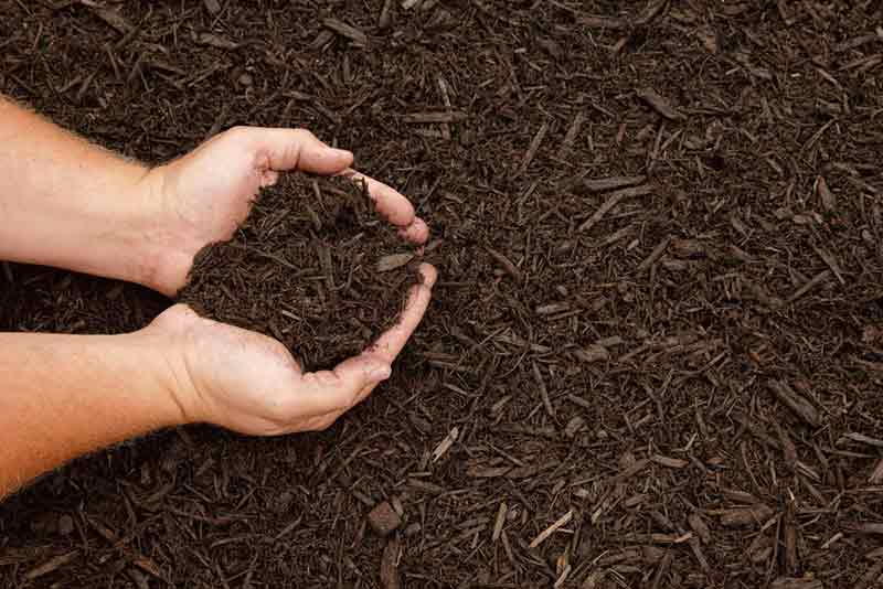 Organic Mulch is Best for Soil