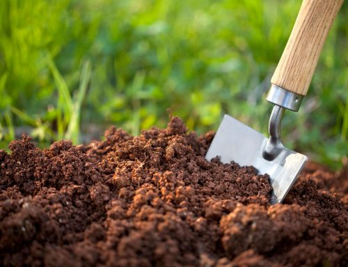 How to Test your Soil's pH Level