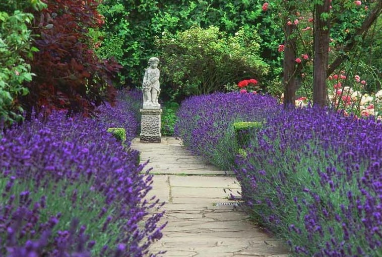 landscaping ideas with lavender on pathways