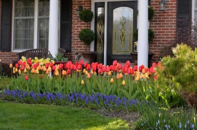 landscaping with tulips in front yard