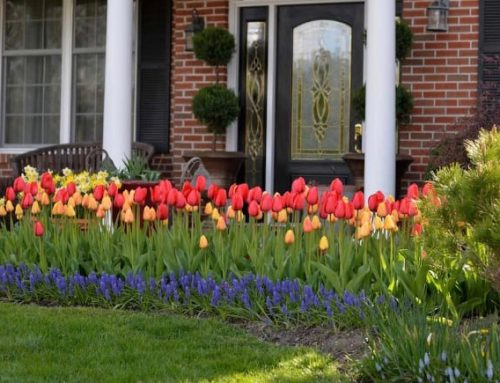 Refreshing Your Home: Top 20 Landscaping Tips for Your Front Porch