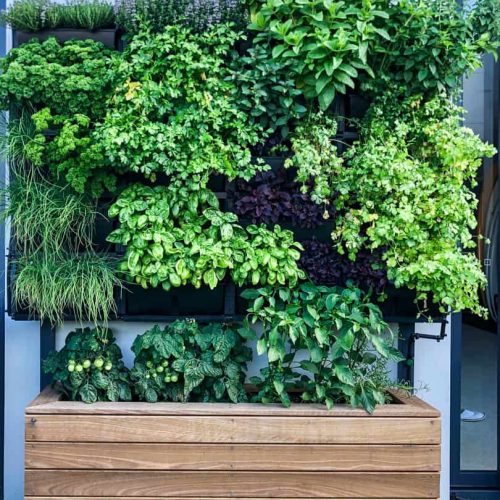 Green walls landscaping project 2