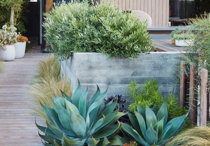 ideas for landscaping with low water plants