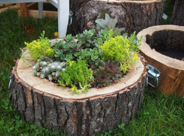 diy tree stump planters