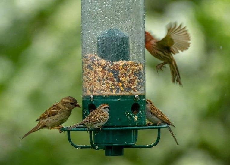 bird feeder in the backyard