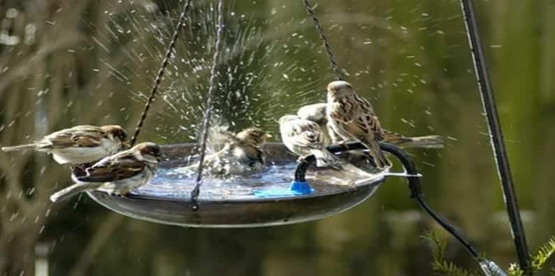 birds drinking water from a birdfeeder in a backyard