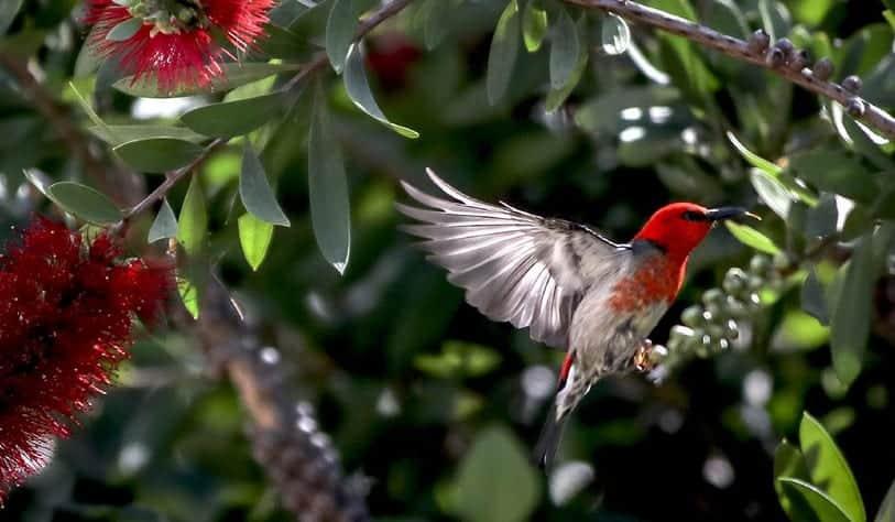 birds playing around bushes and shrubs