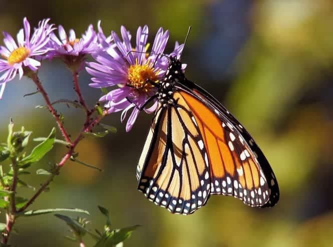 plants attracting butterflies in the backyard