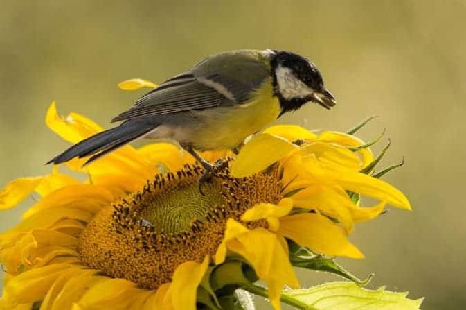 plants attracting song birds to garden