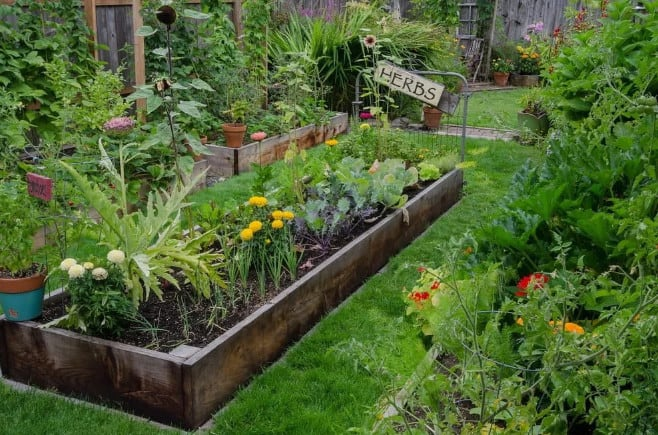 edible landscaping with herbs on a raised garden bed